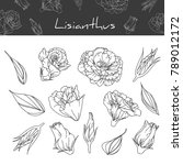 collection lisianthus with line ... | Shutterstock .eps vector #789012172