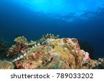 banded sea snake   Shutterstock . vector #789033202