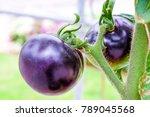 Fresh Purple Heirloom Tomatoes...