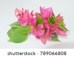 red flowers isolated on a white ... | Shutterstock . vector #789066808