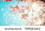 beautiful sakura flower  cherry ... | Shutterstock . vector #789081862