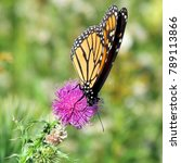 Small photo of Monarch butterfly on the lesser burdock flower on a shore of the Lake Ontario in Toronto, Canada, October 9, 2013