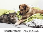 Stock photo dog and cat together 789116266