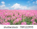 pink flower outdoor landscape...   Shutterstock . vector #789122995