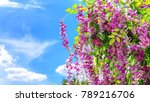 spring blooming flowers in the... | Shutterstock . vector #789216706