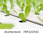 green cos in plant hydroponic... | Shutterstock . vector #789222532