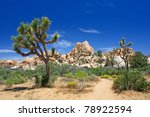 Landscape With Joshua Tree ...