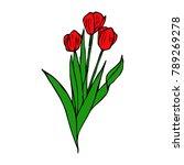 tulip flower illustration.... | Shutterstock . vector #789269278