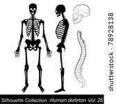 human skeleton   Shutterstock .eps vector #78928138