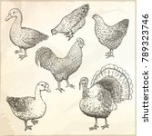 collection of farm poultry.... | Shutterstock .eps vector #789323746