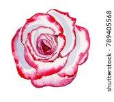wildflower hybrid rose flower... | Shutterstock . vector #789405568