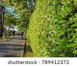 jogging along green shrub fence ... | Shutterstock . vector #789412372