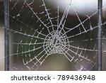 icy spider web | Shutterstock . vector #789436948