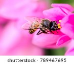 real life size view of honey... | Shutterstock . vector #789467695