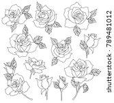 rose flower illustration  i... | Shutterstock .eps vector #789481012