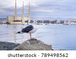 Seagull Resting On A Rock ...