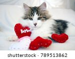 Stock photo cute white and brown tabby kitten with red valentines hearts that says be mine laying on a white 789513862