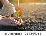 human hands planting little... | Shutterstock . vector #789544768