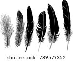 illustration with six feathers... | Shutterstock .eps vector #789579352