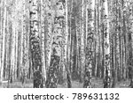 black and white photo of forest ... | Shutterstock . vector #789631132