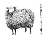Sheep Sketch Style. Hand Drawn...