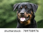 healthy purebred dog... | Shutterstock . vector #789708976