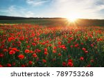 Field With Red Poppies ...
