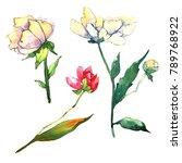 wildflower peony flower in a... | Shutterstock . vector #789768922