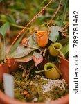 carnivorous plant. flower   Shutterstock . vector #789781462