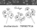 collection ginkgo biloba... | Shutterstock .eps vector #789807916