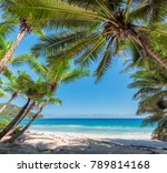 beautiful palm trees on... | Shutterstock . vector #789814168