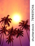 tropical palm trees at vivid...   Shutterstock . vector #789859246