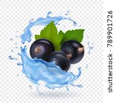 berries of black currant with... | Shutterstock .eps vector #789901726