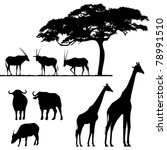 African Animals  Vector...