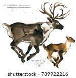 caribou. reindeer watercolor... | Shutterstock . vector #789922216