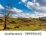 cultivated land fields... | Shutterstock . vector #789954142