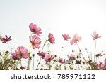 cosmos flower in field on sky... | Shutterstock . vector #789971122