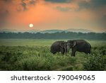 Two Sri Lankan Wild Elephant...