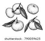 mandarin orange set. ink sketch ...   Shutterstock .eps vector #790059625