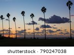 palm trees silhouettes on... | Shutterstock . vector #790247038