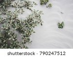 plants growing in sand... | Shutterstock . vector #790247512