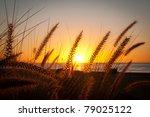 Grassy Sunrise