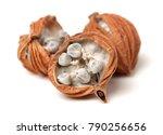 dried herbs  latin name  amomum ... | Shutterstock . vector #790256656