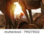 pushkar  rajasthan  india  ... | Shutterstock . vector #790275022