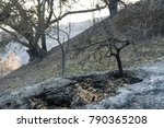 Aftermath Of Thomas Fire On...