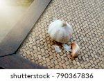 garlic. garlic cloves and...   Shutterstock . vector #790367836