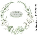 herbal frame and logo with wild ... | Shutterstock .eps vector #790371232