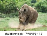 rhino  dust  running  charge | Shutterstock . vector #790499446