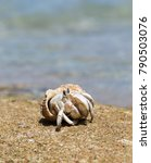 hermit crab in a screw shell | Shutterstock . vector #790503076