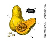 butternut squash vector drawing.... | Shutterstock .eps vector #790582396